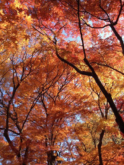 京都の紅葉~吉田山_e0152493_23105912.jpg