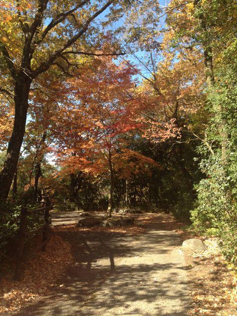 京都の紅葉~吉田山_e0152493_23112869.jpg