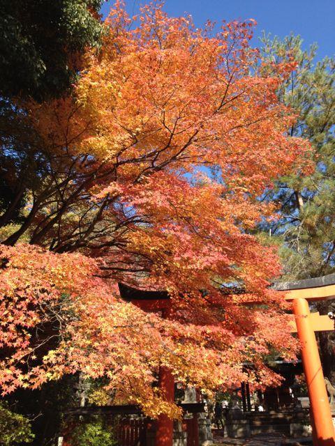 京都の紅葉~吉田山_e0152493_2311482.jpg