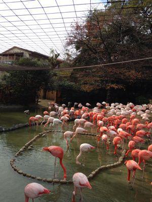 神戸王子動物園_a0188798_14421450.jpg