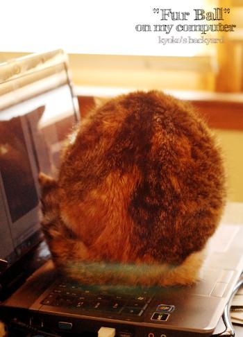 PCの上の、毛皮の塊_b0253205_1454416.jpg