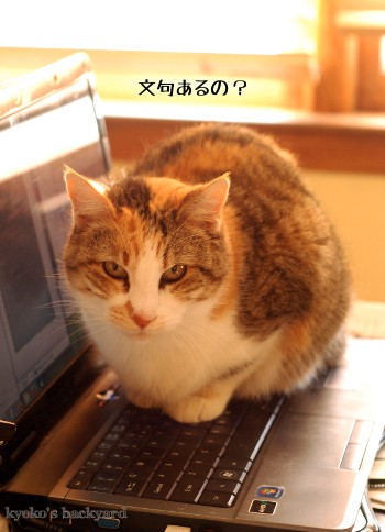 PCの上の、毛皮の塊_b0253205_1463670.jpg