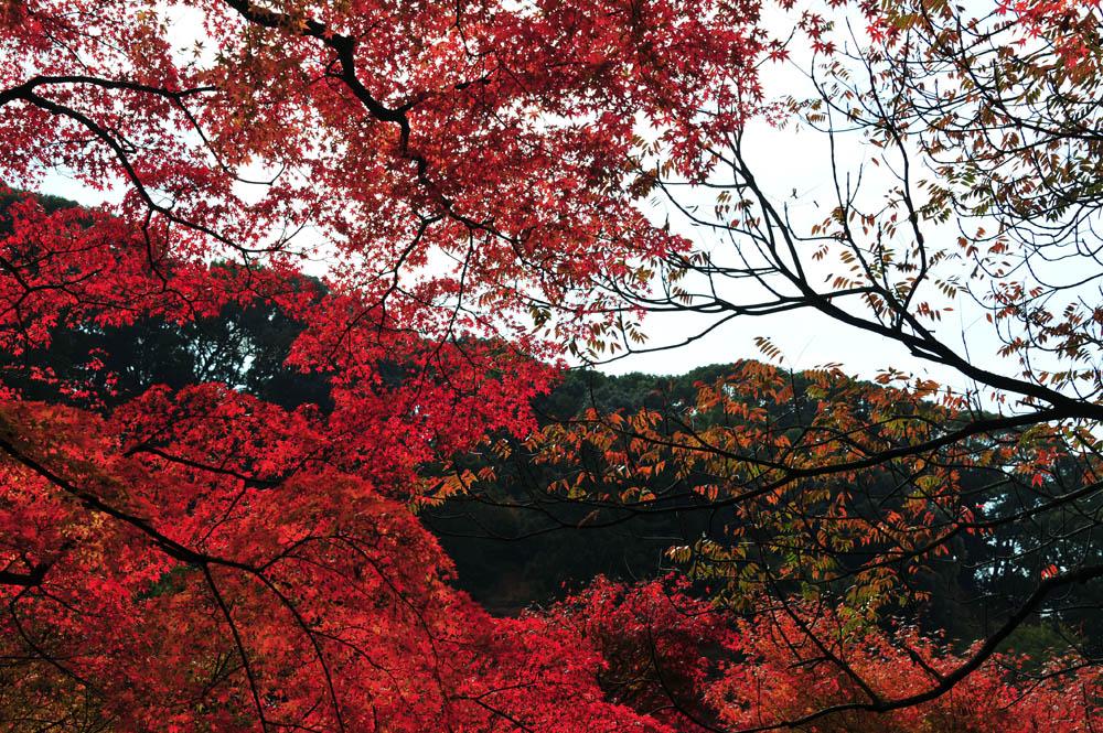 太宰府の紅葉 2013_a0042310_166129.jpg