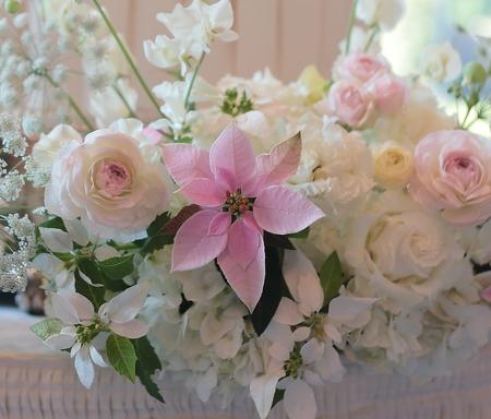 冬の装花 オータニ様へ ポインセチア プリンセチアとクリスタルスノー_a0042928_21264396.jpg