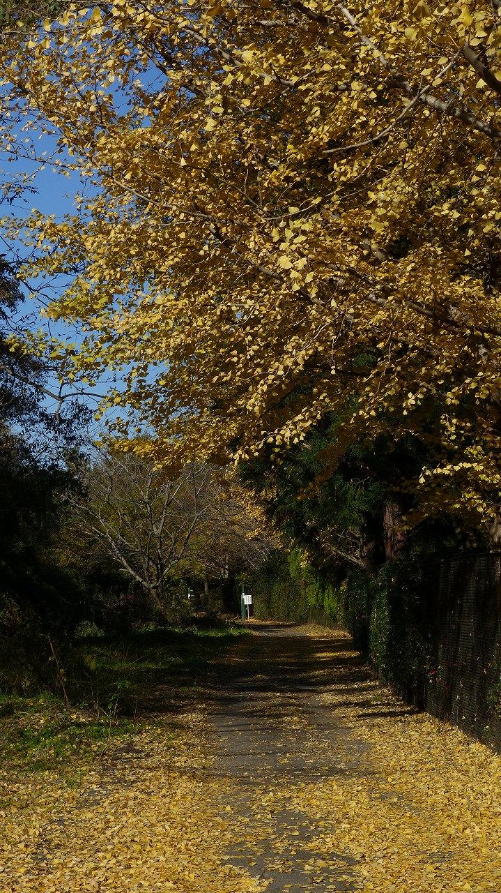 世界ネコ歩き 秋が瀬の森編_a0185081_2315988.jpg