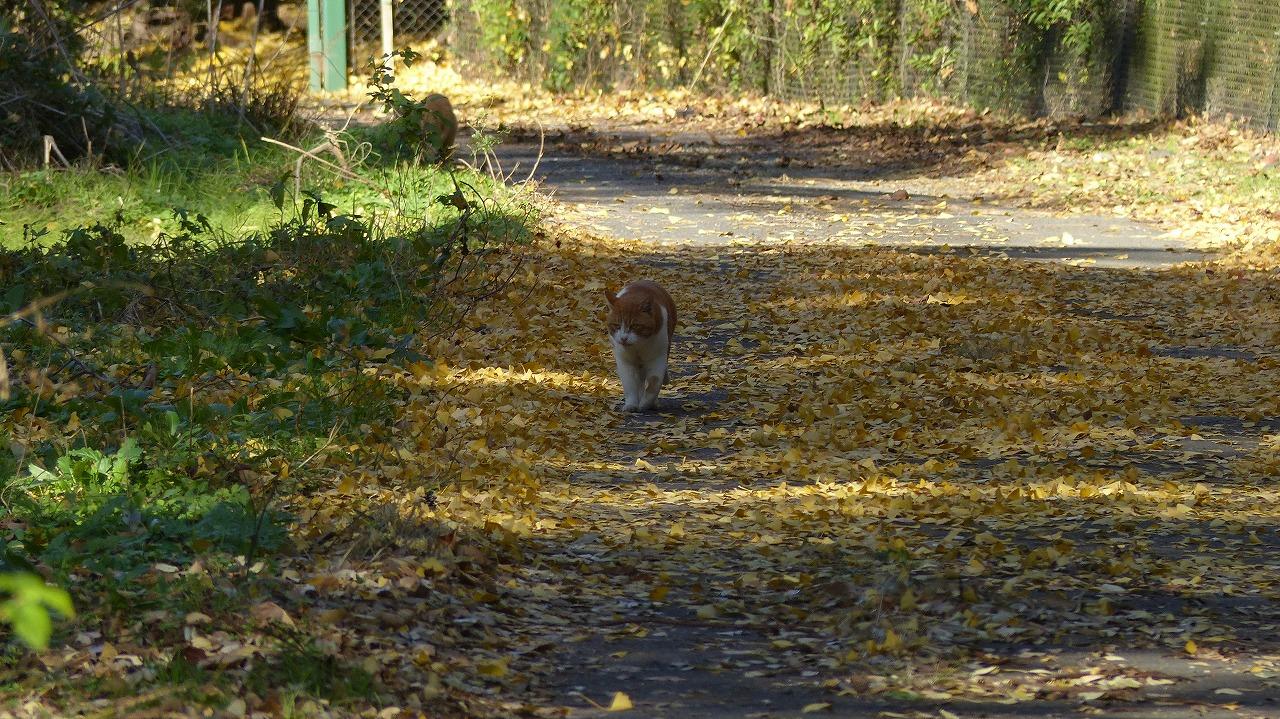 世界ネコ歩き 秋が瀬の森編_a0185081_2322081.jpg