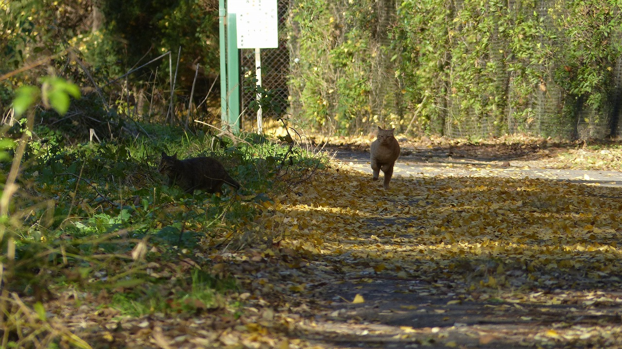 世界ネコ歩き 秋が瀬の森編_a0185081_2323128.jpg