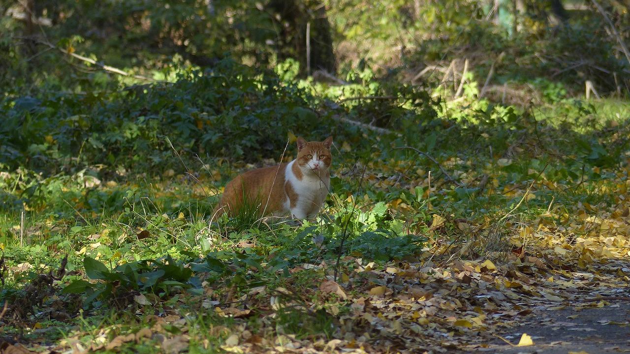 世界ネコ歩き 秋が瀬の森編_a0185081_2324231.jpg