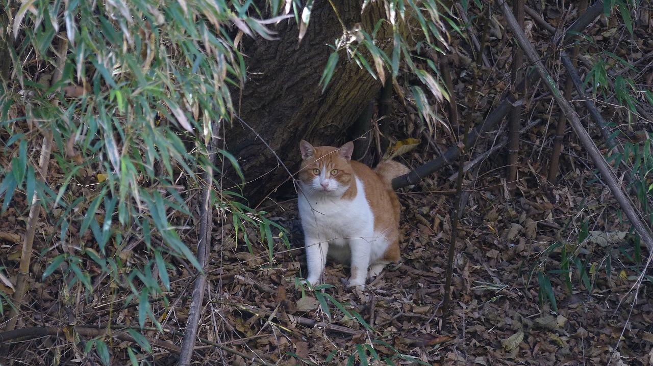 世界ネコ歩き 秋が瀬の森編_a0185081_2325426.jpg