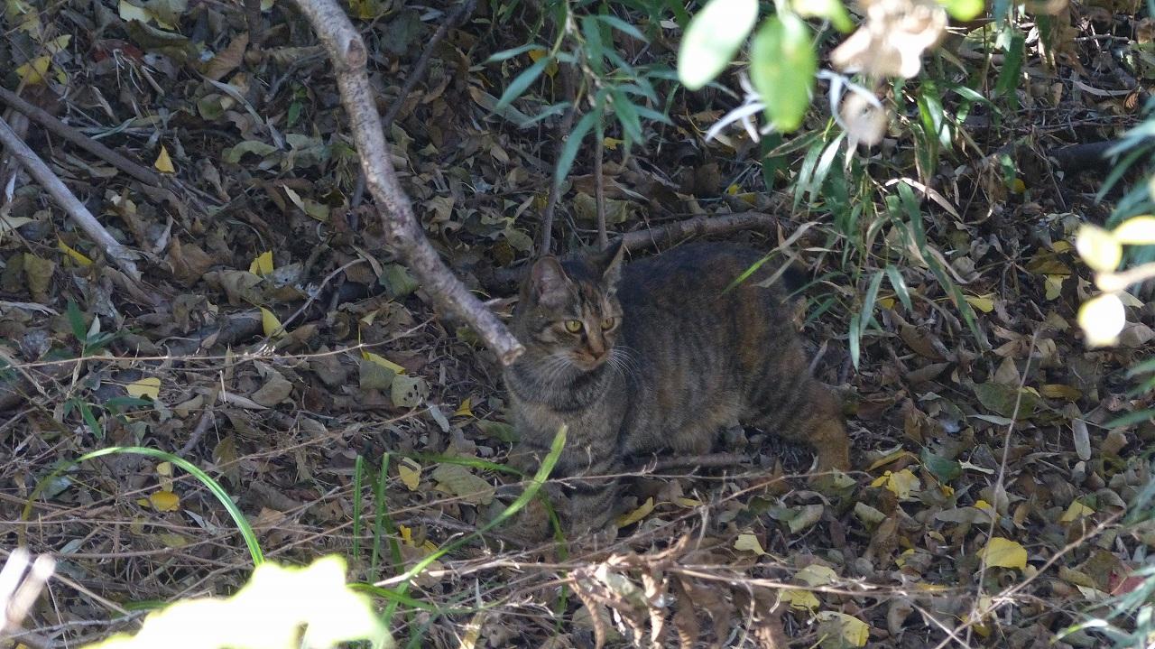 世界ネコ歩き 秋が瀬の森編_a0185081_2331873.jpg