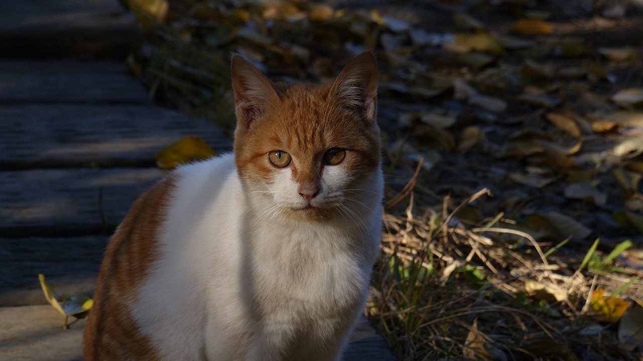 世界ネコ歩き 秋が瀬の森編_a0185081_2333942.jpg
