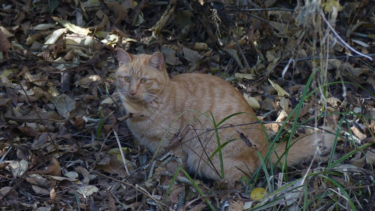 世界ネコ歩き 秋が瀬の森編_a0185081_233663.jpg