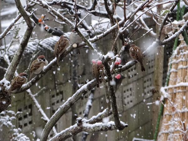 ちょっとの間の雪景色♪ _a0136293_182596.jpg