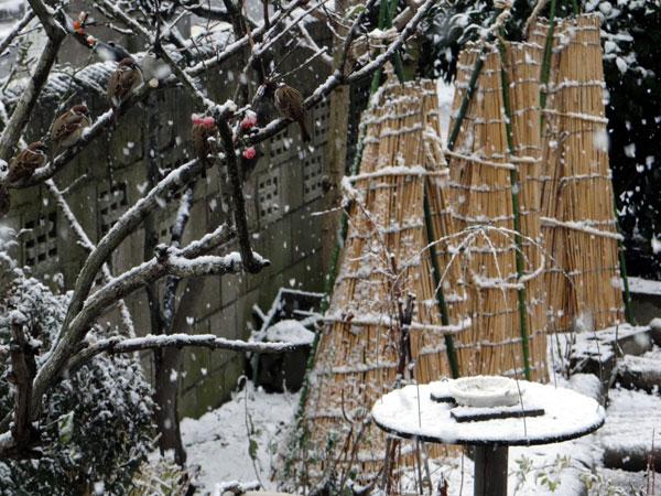 ちょっとの間の雪景色♪ _a0136293_1834690.jpg