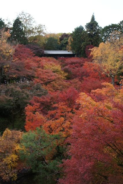 京都の紅葉と源氏物語・・_f0083294_21534864.jpg