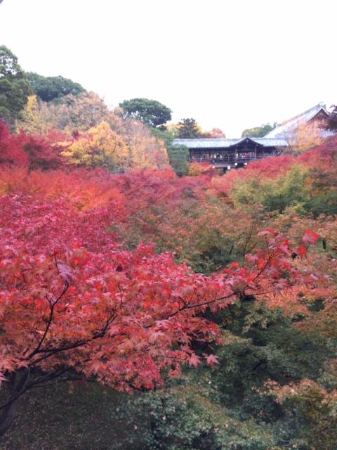 京都の紅葉と源氏物語・・_f0083294_21543540.jpg