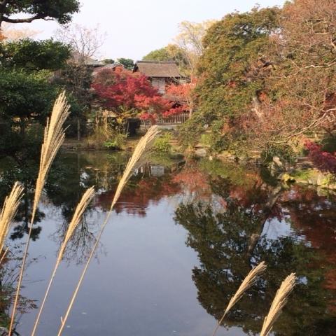 京都の紅葉と源氏物語・・_f0083294_220888.jpg
