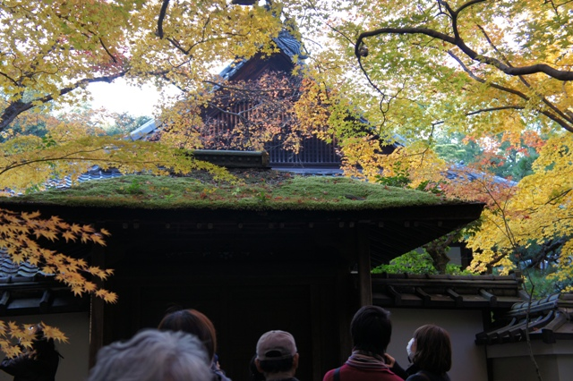 京都、高桐院・・・_f0083294_225079.jpg