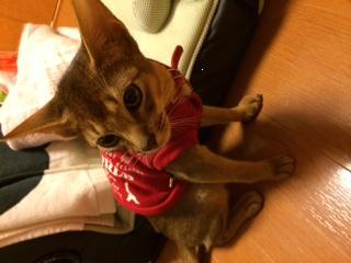 アビちゃんのお洋服姿_e0033609_1647515.jpg