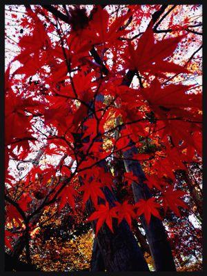 紅葉と風がはこぶ工房展_c0227612_1239383.jpg