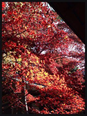 紅葉と風がはこぶ工房展_c0227612_12395149.jpg
