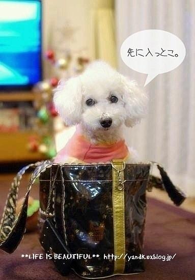 うち飲み2013*November_d0083623_002155.jpg