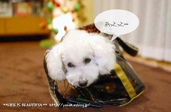 うち飲み2013*November_d0083623_0549.jpg