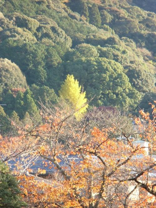 散歩道 京都市立美術館にて、_f0227828_21293523.jpg
