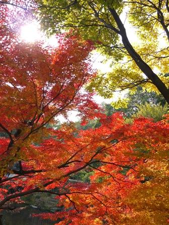 水前寺成趣園 熊本市中央区水前寺公園。_a0143140_064839.jpg
