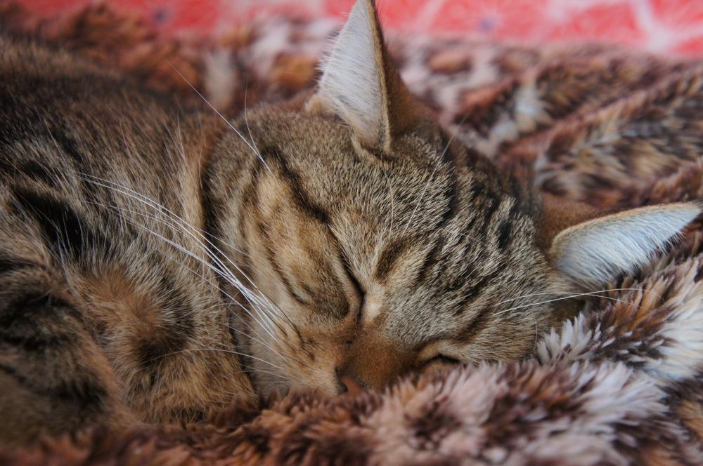 ネコ、ぬくぬく_d0001843_23441555.jpg