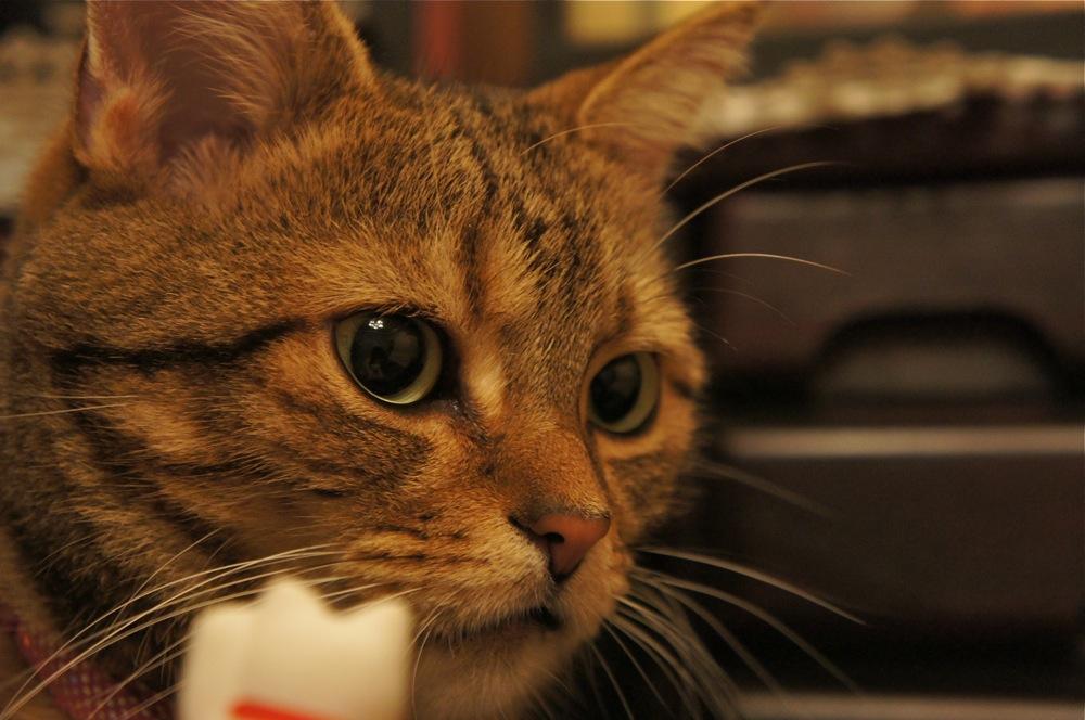 ネコ、ぬくぬく_d0001843_2347922.jpg