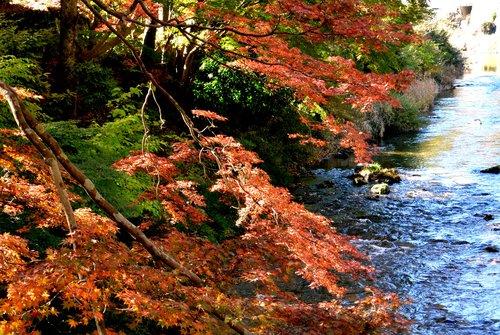 今年の秋は駒ケ岳から_b0115553_10184180.jpg