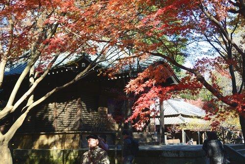 今年の秋は駒ケ岳から_b0115553_10525569.jpg