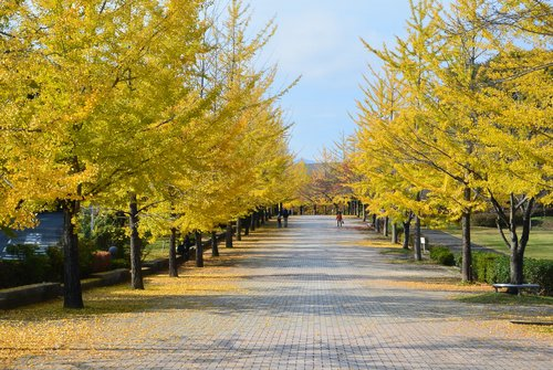 今年の秋は駒ケ岳から_b0115553_1072262.jpg