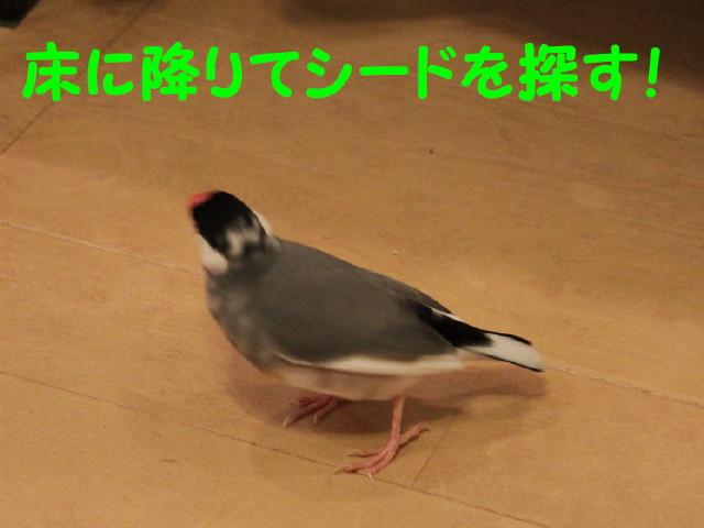 b0158061_024275.jpg