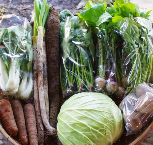 今週の野菜セット(12/3~12/7着)_c0110869_15183981.jpg