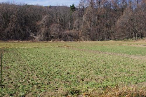 12月の小麦畑(小麦2014)_c0110869_15235152.jpg