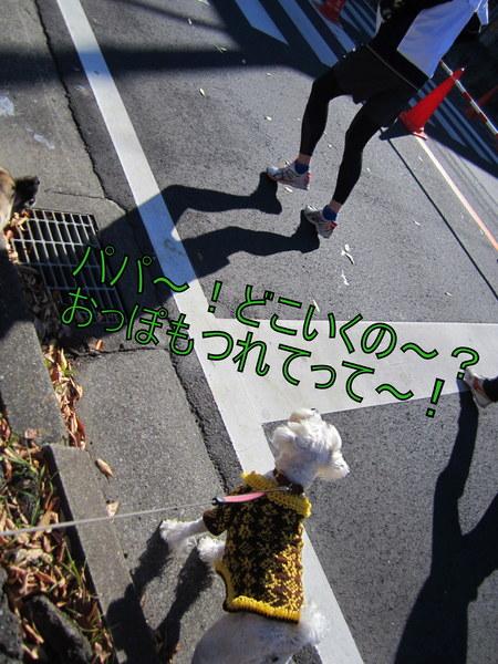 d0264176_1654039.jpg
