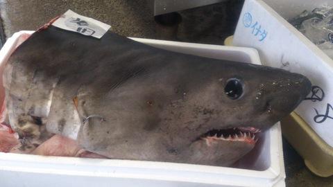 サメ料理いろいろ。_d0182179_18582644.jpg