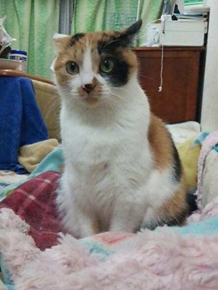 今日の猫たち_b0112380_20441733.jpg