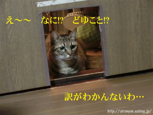 a0159490_1659175.jpg