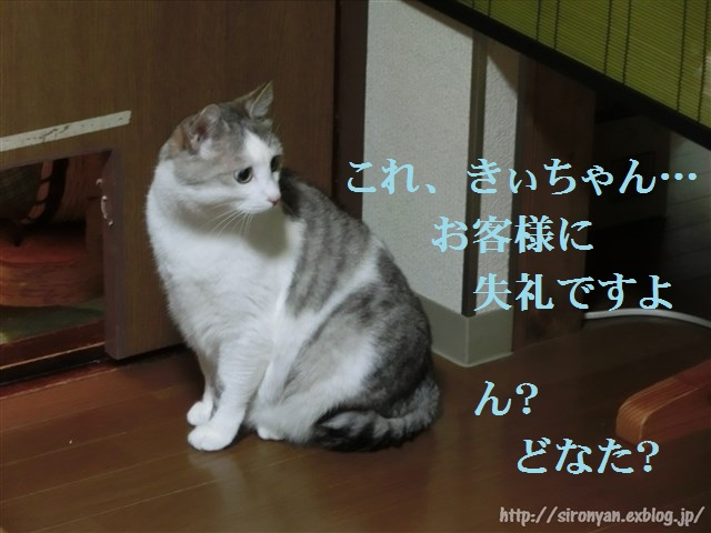 a0159490_1659624.jpg