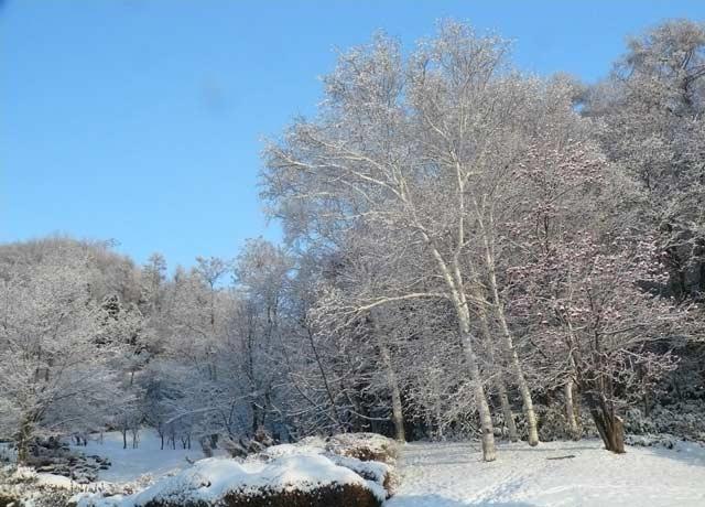 雪景色_d0162994_14411746.jpg
