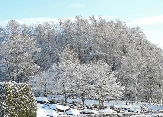 雪景色_d0162994_8572759.jpg