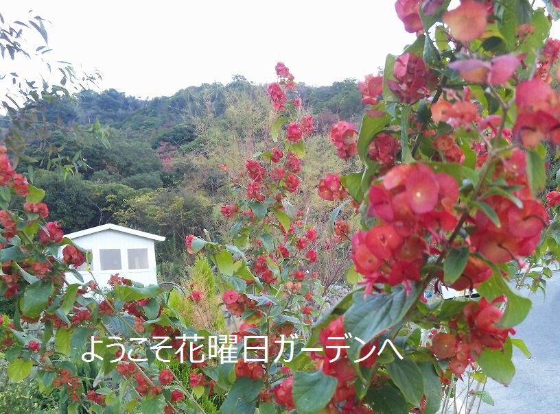 d0172010_5594011.jpg