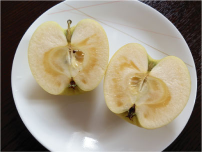 おいしいリンゴ_e0142619_2330972.jpg
