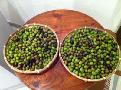 オリーブの塩水漬け(olive in salamoia)_d0136540_7561156.jpg