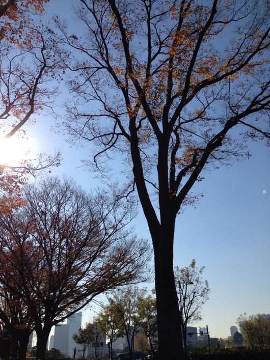 冬の目覚め_a0267845_16143169.jpg