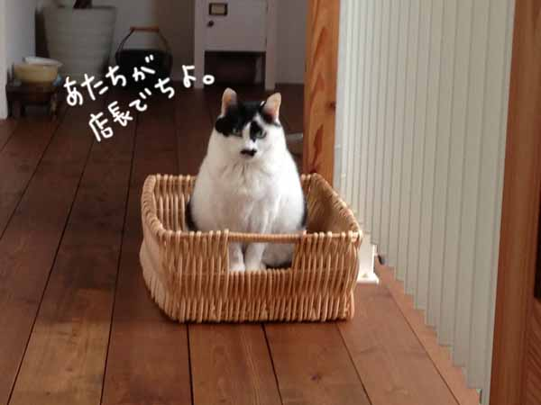 なんちゃって 雑貨&猫かふぇ_b0223446_16175981.jpg