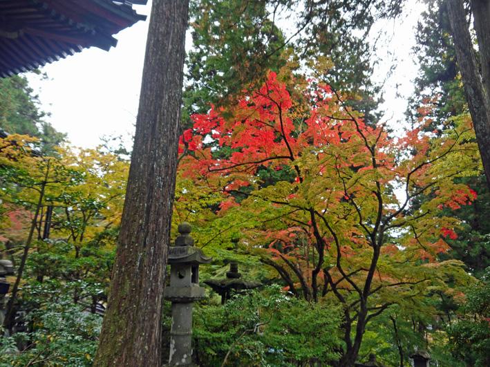 華厳寺に発願の成就を報告:団塊サミットin Gifu 2013③_c0014967_13491985.jpg